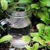 Gubitak čula ukusa i mirisa: Domaći lekovi rešavaju problem