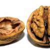 Amino-kiseline neophodne vašem mozgu