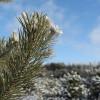 Šuma u februaru: puna je lekovitog blaga