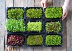 Uzgajamo mikrobilje