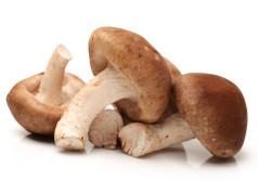 BUKOVAČA, VELIKA PUHARA I LISIČARKA: Pečurke dobre za jelo, još bolje za zdravlje